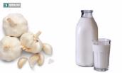 Tác dụng kỳ diệu của sữa tỏi mà bạn chưa biết?