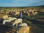 Những cánh đồng chăn cừu hái ra tiền ở Việt Nam