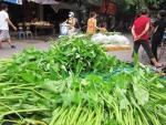 Rau muống: Bí quyết phân biệt rau nhiễm chì và rau sạch
