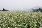 Lễ hội hoa tam giác mạch Hà Giang 2016 diễn ra từ 14/10