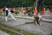 Có một ngôi làng toàn mèo độc đáo ở Đài Loan