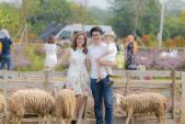 Mê mẩn cánh đồng hoa bao la với bầy cừu xinh xắn giữa lòng Hà Nội