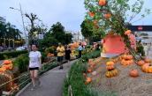 Vườn bí ngô ở Sài Gòn- điểm chụp ảnh hot nhất Halloween năm nay