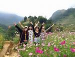 Say đắm trước vẻ đẹp mong manh của vườn hoa cúc nhái ở Sapa