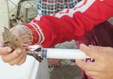 Chấm dứt tình trạng sử dụng tạp chất, chất cấm trong tôm