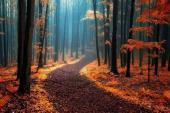 Ngắm những khu rừng đẹp như cổ tích trên thế giới