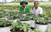 Hoa kiểng mới kiểu dáng lạ, độc ra thị trường dịp Tết