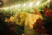 Chợ hoa Quảng Bá - một Hà Nội khác biệt về đêm
