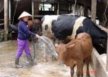 Chăn nuôi trong