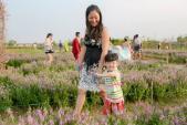 Mê mẩn cánh đồng hoa ngọc hân đẹp ngất ngây giữa lòng Hà Nội