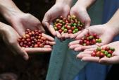 Khám phá hành trình giữ trọn chất cà phê Buôn Mê