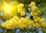 Khám phá những mùa hoa cỏ tháng 12 ở Đà Lạt