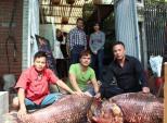 """Cặp cá """"khủng"""" về HN, gần 4 triệu đồng/kg vẫn đắt hàng"""