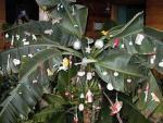 Những phong tục Giáng sinh kỳ lạ nhất thế giới