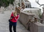 Khách ngượng chín mặt vì bị khỉ kéo tụt quần