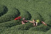 Ngày tết Mộc Châu rực rỡ trên trang ảnh nổi tiếng