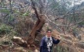 Ngắm cây đào rừng lạ ở Sơn La gây sốt dân chơi