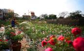 Những vườn hoa đẹp lạ hút hồn dân chơi dịp Tết
