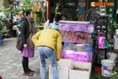 Dân HN chuộng mua cá ngoại nhập đắt tiền cúng ông Công ông Táo