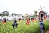 Tết Nguyên Đán 2017: Giới trẻ nô nức đi chụp ảnh tại vườn đào Nhật Tân