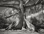 Hình ảnh ma mị về những loài cây già nhất thế giới