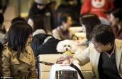 Nhật Bản mở tour du lịch bằng máy cùng chó