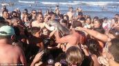 Cá heo chết vì bị du khách bắt chụp ảnh