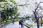Lạc trôi giữa rừng hoa khắp nơi trên thế giới