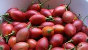 Cà chua lạ 1 triệu đồng/kg đang hot ở Hà Nội có gì độc?