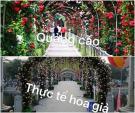 Lễ hội hoa hồng Bulgaria: Sở Văn hóa Hà Nội yêu cầu tháo hoa giả, thay thế bằng hoa thật