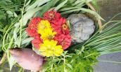 Ngất ngây vườn rau quả Việt trĩu giàn tại Đài Loan