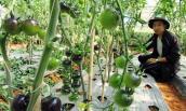 Trồng rau nhà kính ở Lâm Đồng: Đầu tư 1, thu lợi 10
