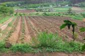 Bổ sung quy định đối tượng được miễn thuế sử dụng đất nông nghiệp