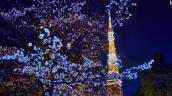 Những điểm ngắm hoa anh đào đẹp nhất Nhật Bản