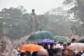 Hàng nghìn người đội mưa dự lễ hội hoa anh đào