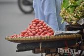 Tháng 3, nhót chín đỏ 100.000 đồng/kg nhan nhản khắp phố phường Hà Nội