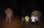 Clip thanh niên Nghệ An ôm voi rừng