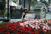 Đến Bà Nà Hills ngắm hàng trăm loài hoa rực rỡ