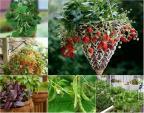 7 loại rau củ người dân phố có thể trồng trong giỏ treo