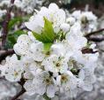 4 cách làm đẹp hiệu nghiệm ít ai biết từ loại quả đặc sản mùa hè
