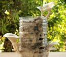 Cách trồng nấm lớn vù vù bằng bã cafe siêu đơn giản