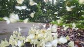 Những cánh hoa biết bay tại Vườn Quốc gia Cúc Phương