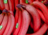 Chị em săn mua chuối đỏ rực siêu lạ giá 250.000 đồng/kg