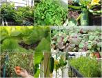 Mướt mắt với dàn rau củ trồng đúng thời vụ