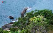 Không tìm được tiếng nói chung về quy hoạch bán đảo Sơn Trà