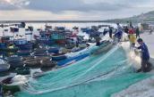 Chèo thúng đi đánh cá cơm quế kiếm tiền triệu một buổi