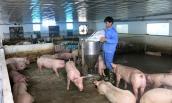 """Khủng hoảng giá lợn: Lợi nhuận của các """"ông lớn"""" ra sao?"""