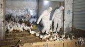 Virus cúm H7N9 lây truyền nhanh gấp 1.000 lần tiến gần Việt Nam