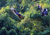 Điều chỉnh quy hoạch Khu du lịch bán đảo Sơn Trà phải bảo tồn sinh thái