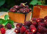 Muốn chống ung thư và trẻ đẹp, hãy ăn quả này thường xuyên